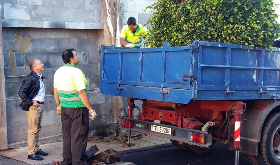 Los Laureles de Indias de la calle Pérez Díaz serán trasplantados a una finca municipal