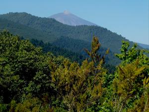 Rutas forestales