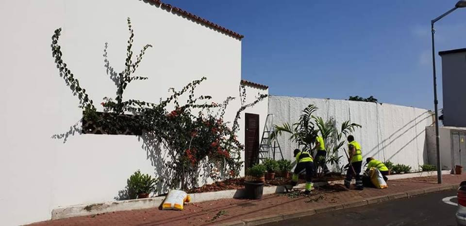 Retirada de cactus en la calle Santo Domingo
