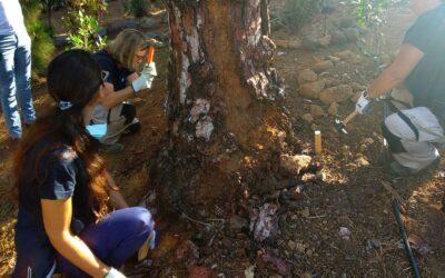 El Ayuntamiento previene la presencia de terminas en el Parque El Pinar