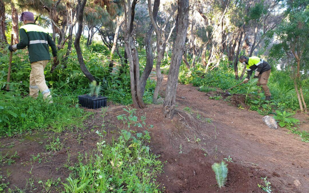 Se llevan a cabo acciones de reforestación del Parque El Pinar